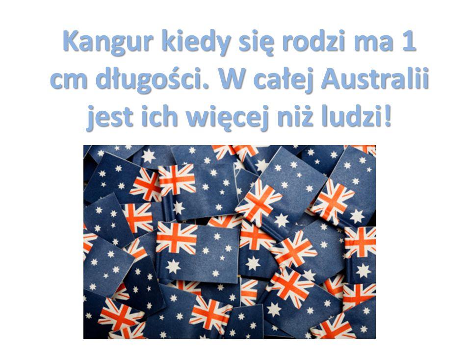 Trochę statystyki… 63 % Australijczyków ma nadwagę ¼ Australijczyków urodziła się poza Australią W Australii jest 75,5 mln owiec, to 3,3 razy więcej niż ludzi