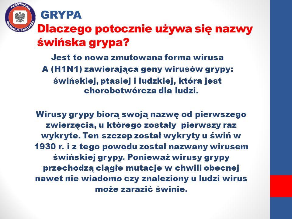 GRYPA Dlaczego potocznie używa się nazwy świńska grypa