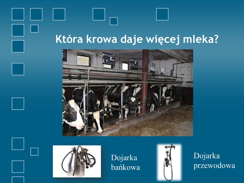 Która krowa daje więcej mleka