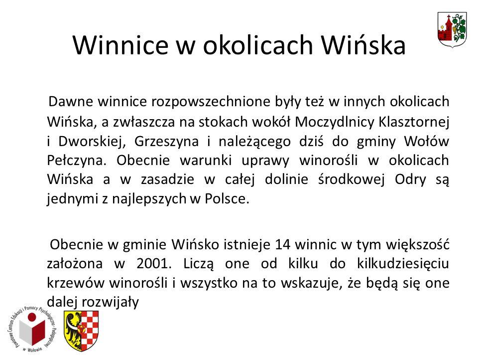 Winnice w okolicach Wińska