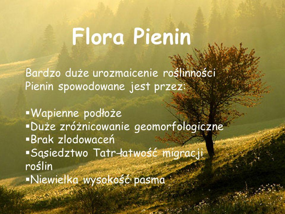 Flora Pienin Bardzo duże urozmaicenie roślinności Pienin spowodowane jest przez: Wapienne podłoże.