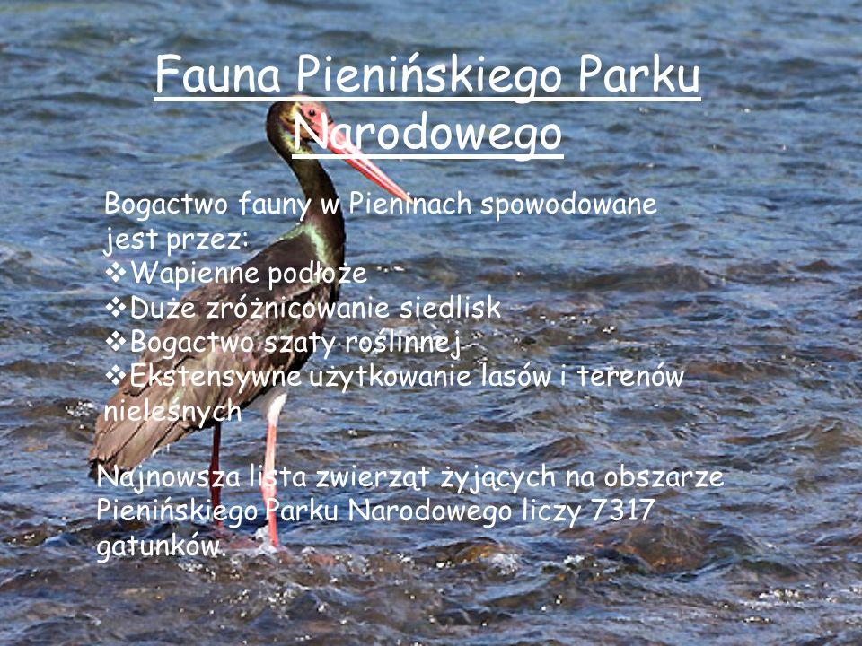 Fauna Pienińskiego Parku Narodowego