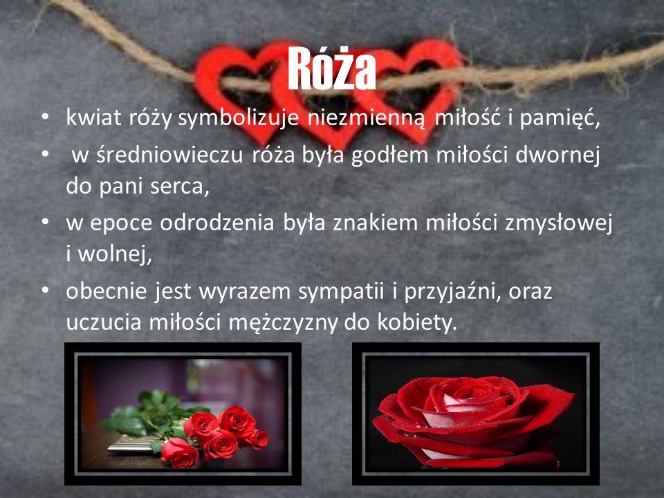 Róża kwiat róży symbolizuje niezmienną miłość i pamięć,