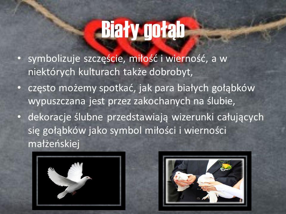 Biały gołąb symbolizuje szczęście, miłość i wierność, a w niektórych kulturach także dobrobyt,