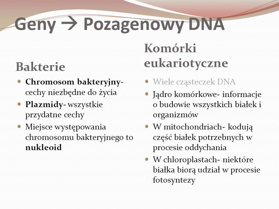 Geny  Pozagenowy DNA Komórki eukariotyczne Bakterie