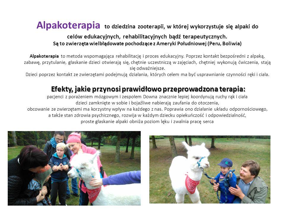 Alpakoterapia to dziedzina zooterapii, w której wykorzystuje się alpaki do celów edukacyjnych, rehabilitacyjnych bądź terapeutycznych.