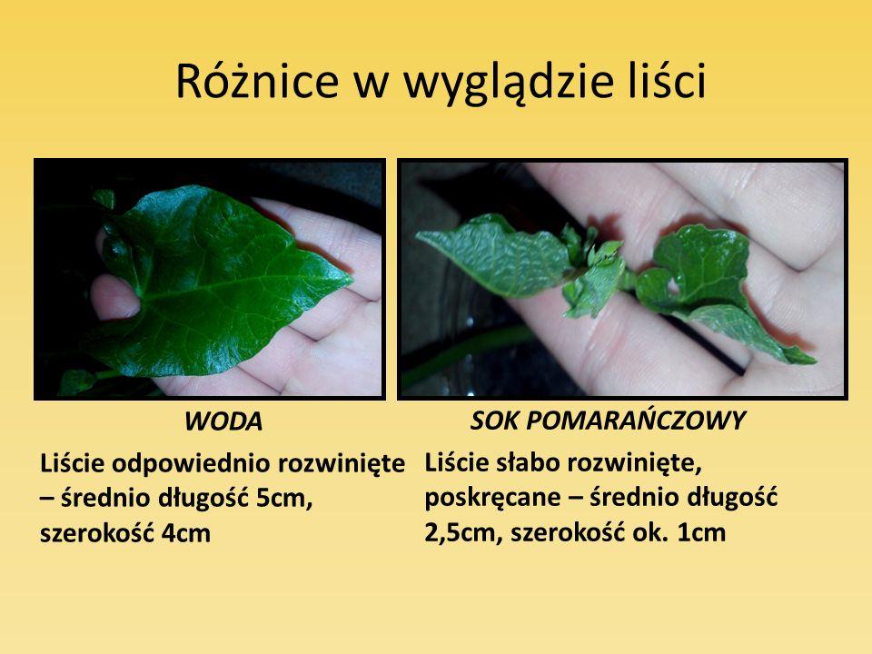 Różnice w wyglądzie liści