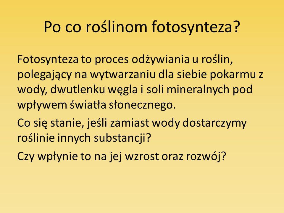 Po co roślinom fotosynteza