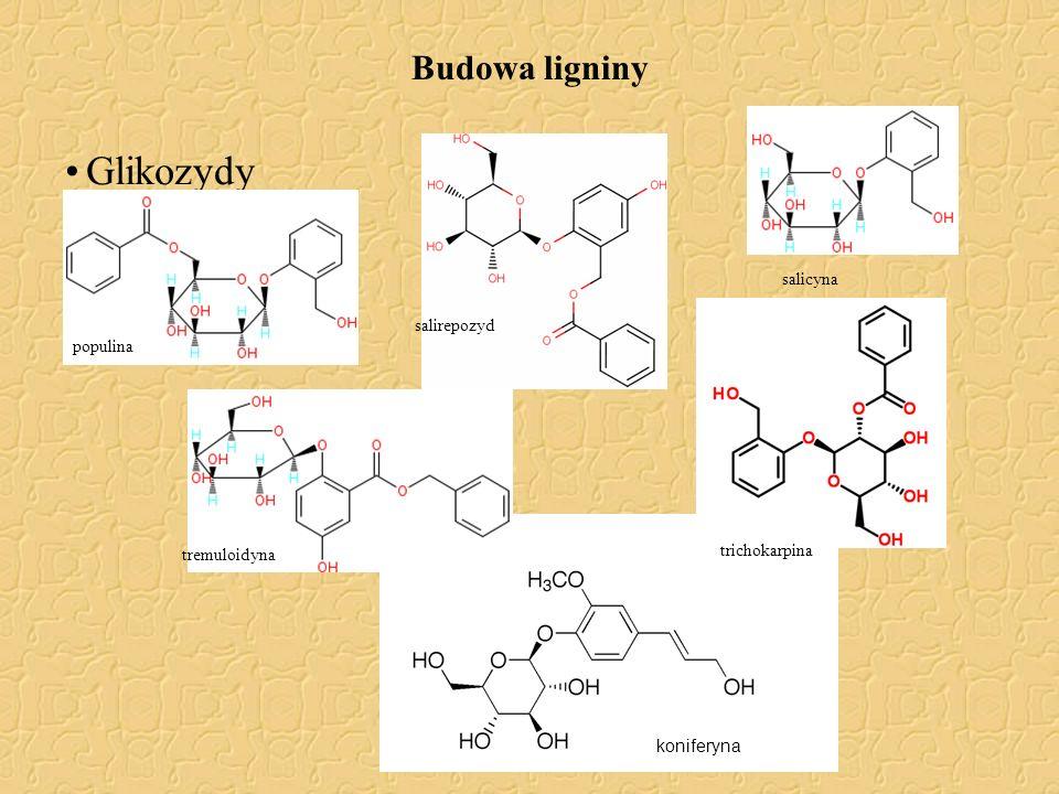 Glikozydy Budowa ligniny salicyna salirepozyd populina trichokarpina