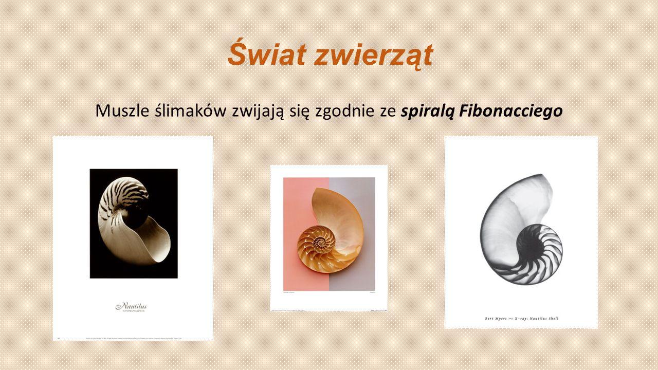 Muszle ślimaków zwijają się zgodnie ze spiralą Fibonacciego