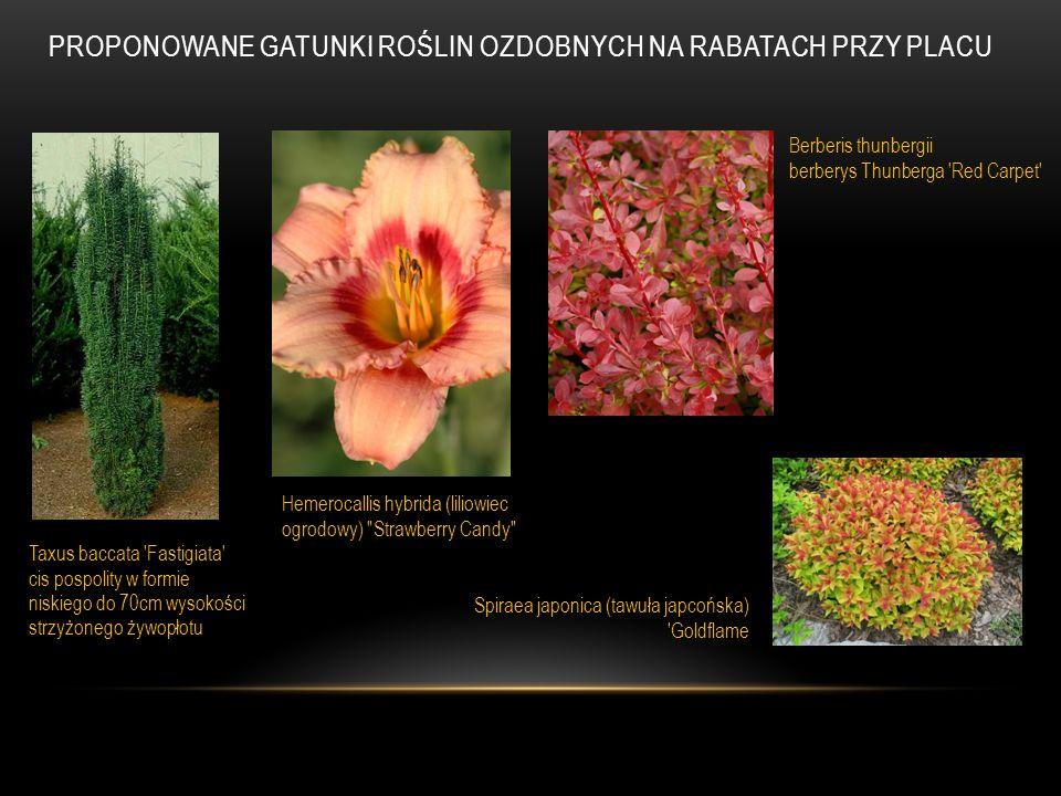 Proponowane gatunki roślin ozdobnych na rabatach przy placu