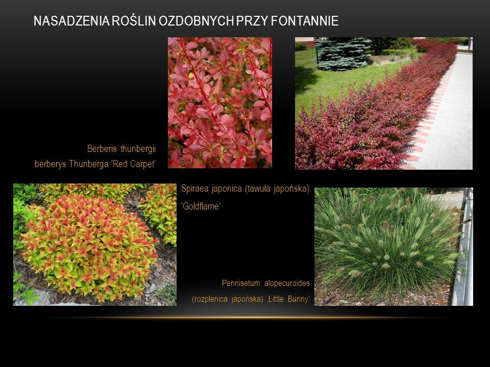 Nasadzenia roślin ozdobnych przy fontannie