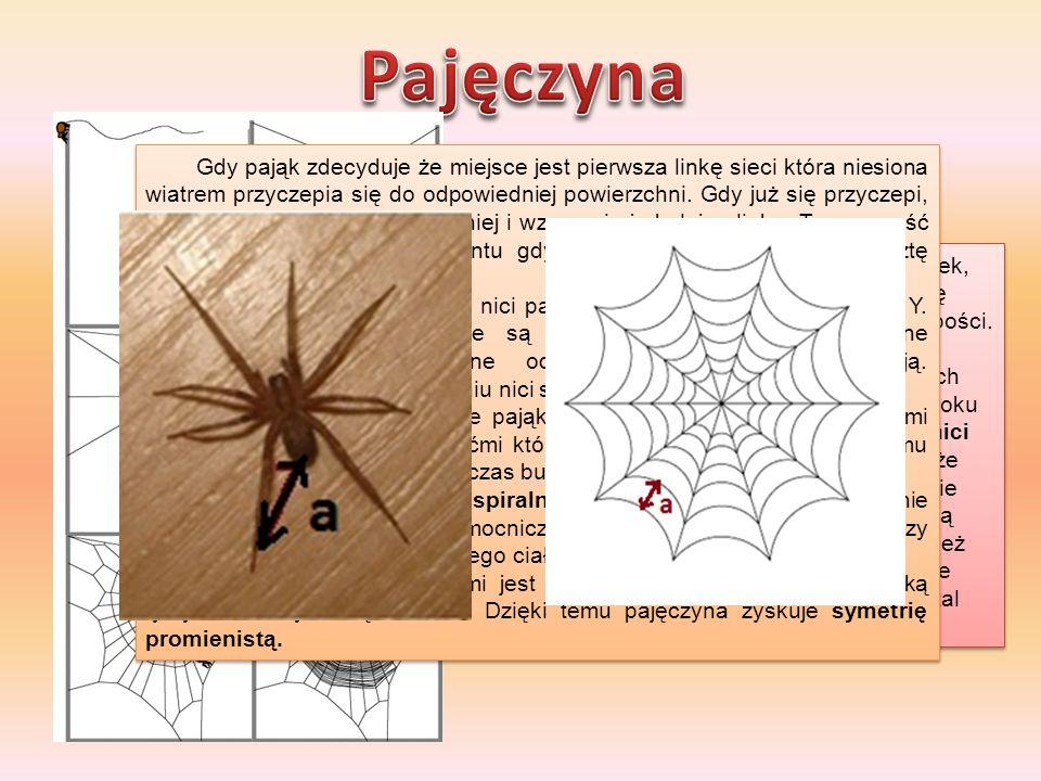 Pajęczyna http://arachnea.org/