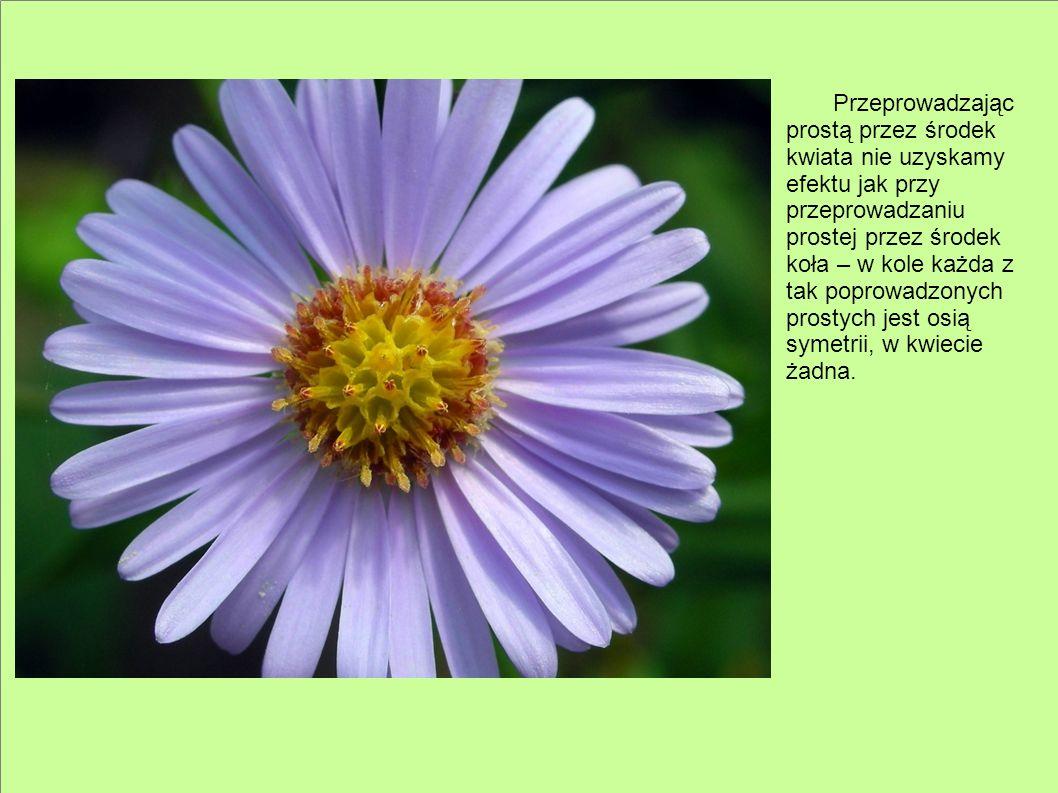 Przeprowadzając prostą przez środek kwiata nie uzyskamy efektu jak przy przeprowadzaniu prostej przez środek koła – w kole każda z tak poprowadzonych prostych jest osią symetrii, w kwiecie żadna.