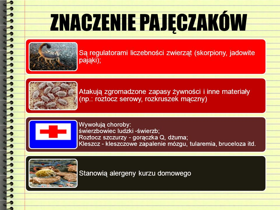 ZNACZENIE PAJĘCZAKÓW Są regulatorami liczebności zwierząt (skorpiony, jadowite pająki);