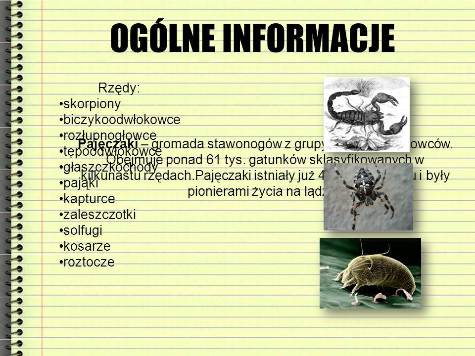 OGÓLNE INFORMACJE Rzędy: skorpiony biczykoodwłokowce rozłupnogłowce