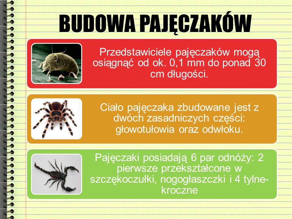 BUDOWA PAJĘCZAKÓW Przedstawiciele pajęczaków mogą osiągnąć od ok. 0,1 mm do ponad 30 cm długości.