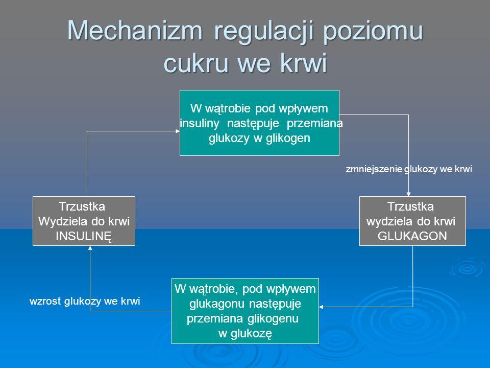 Mechanizm regulacji poziomu cukru we krwi