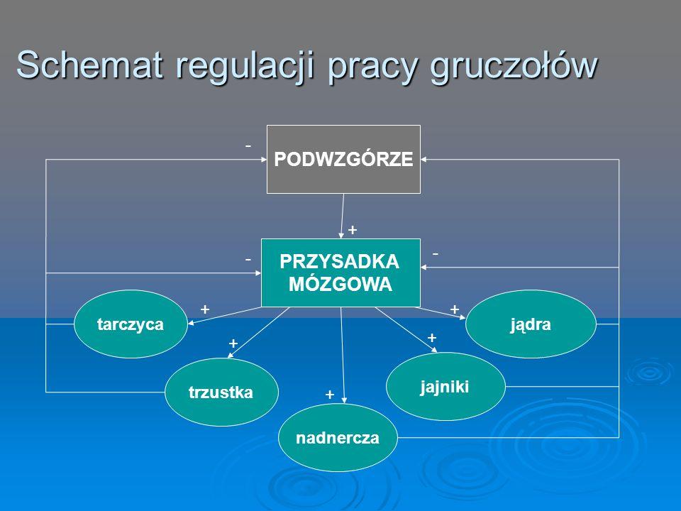 Schemat regulacji pracy gruczołów
