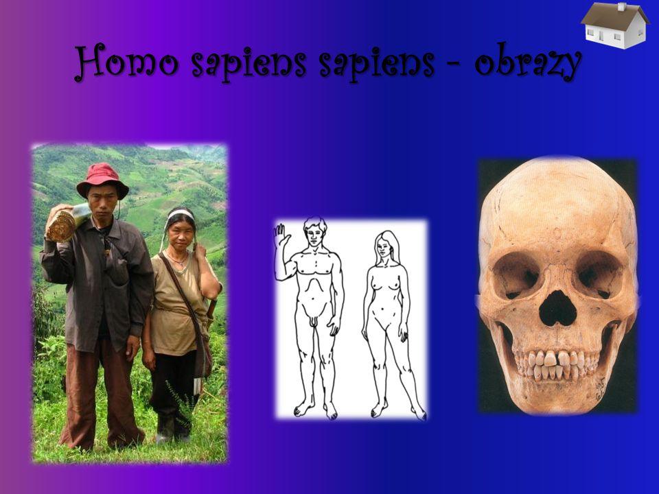 Homo sapiens sapiens - obrazy