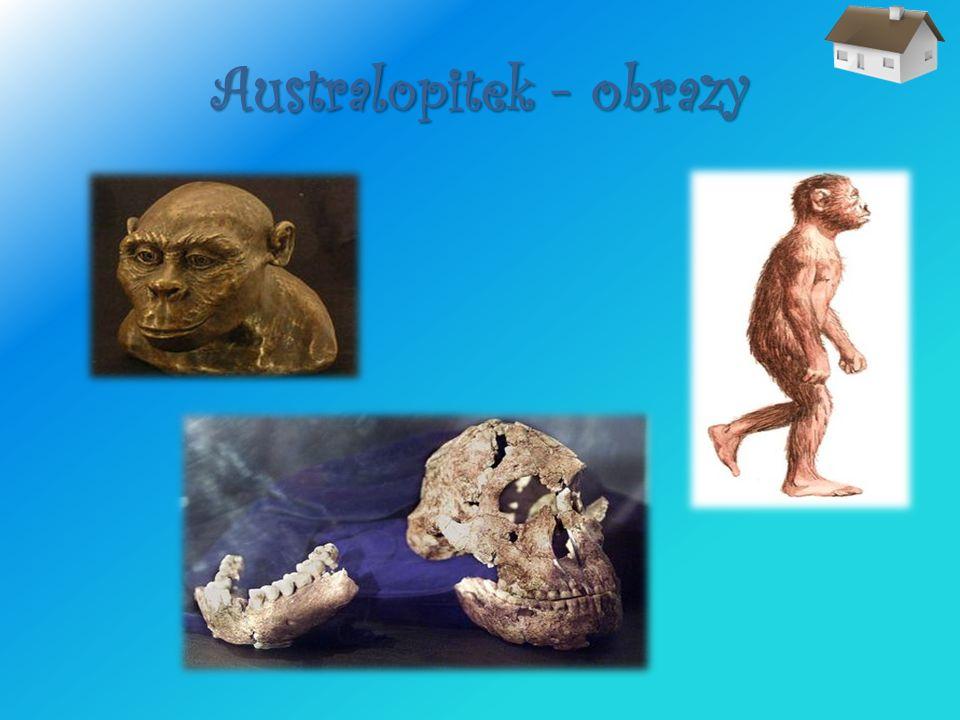 Australopitek - obrazy