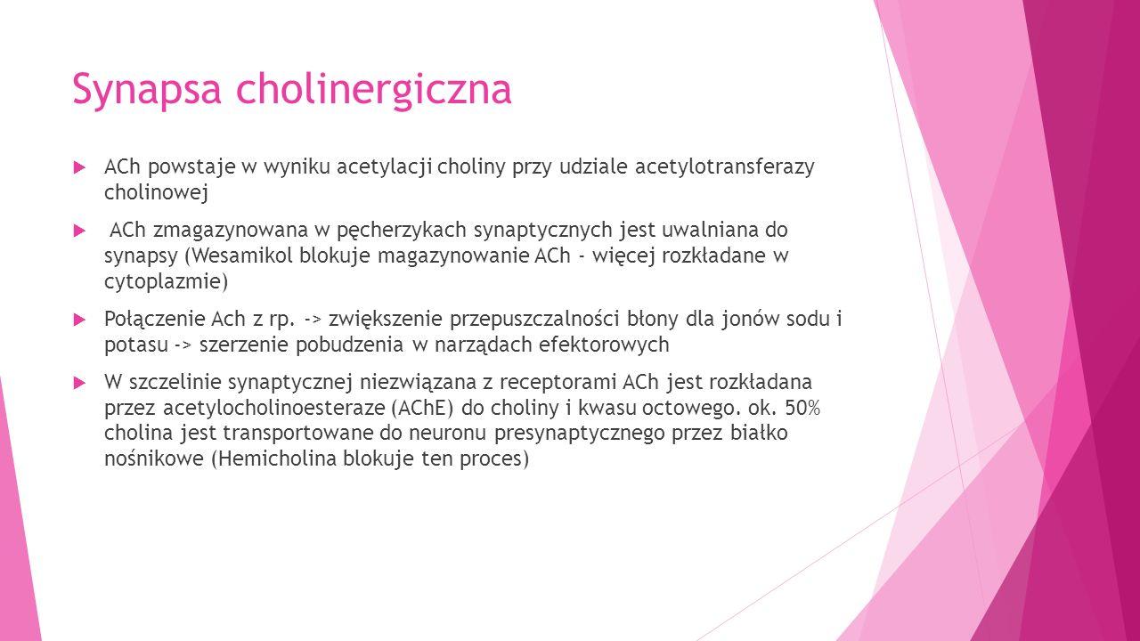 Synapsa cholinergiczna