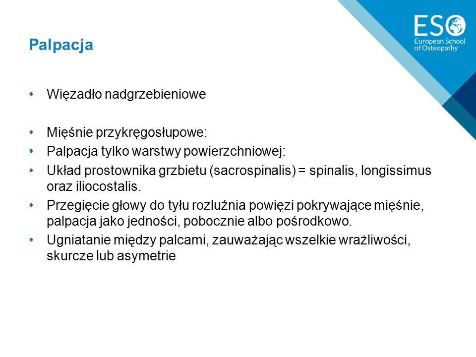 Palpacja Więzadło nadgrzebieniowe Mięśnie przykręgosłupowe: