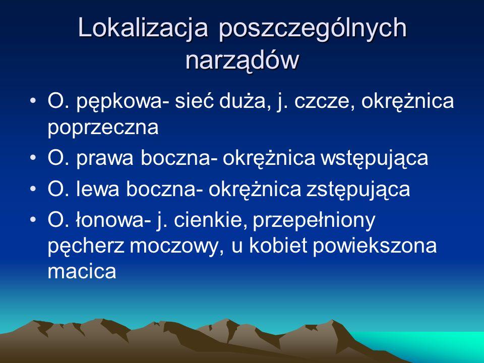 Lokalizacja poszczególnych narządów