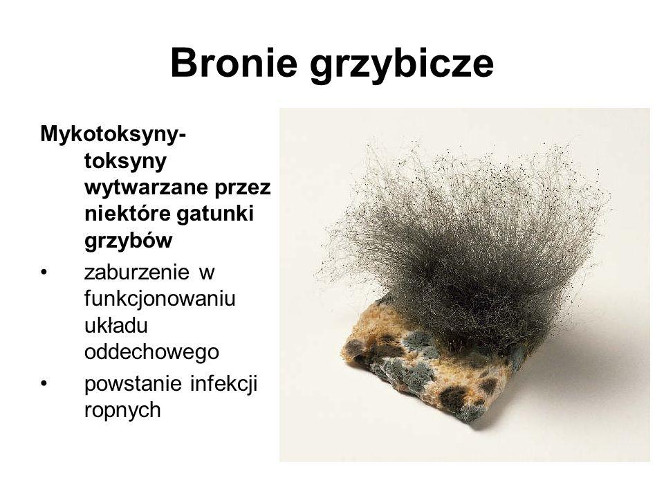 Bronie grzybicze Mykotoksyny- toksyny wytwarzane przez niektóre gatunki grzybów. zaburzenie w funkcjonowaniu układu oddechowego.