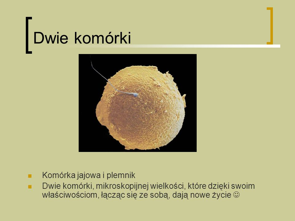 Dwie komórki Komórka jajowa i plemnik