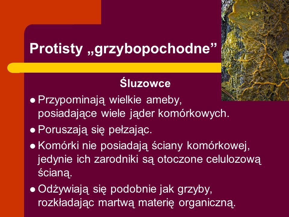 "Protisty ""grzybopochodne"