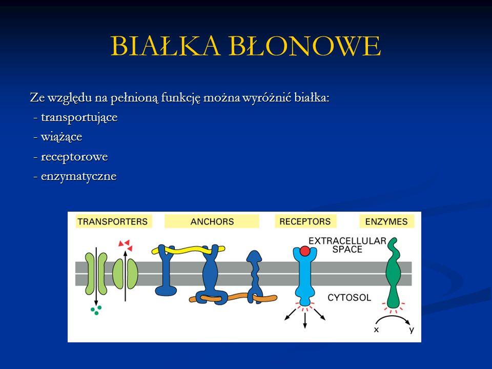 BIAŁKA BŁONOWE Ze względu na pełnioną funkcję można wyróżnić białka: