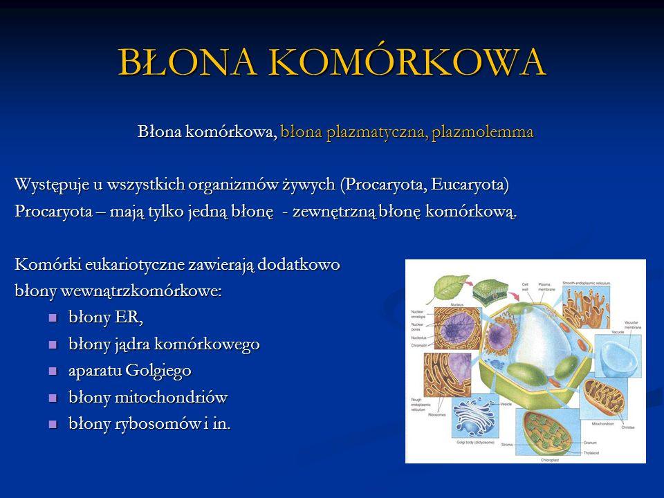 Błona komórkowa, błona plazmatyczna, plazmolemma