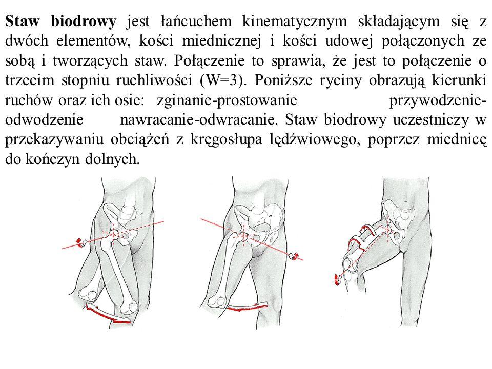 Staw biodrowy jest łańcuchem kinematycznym składającym się z dwóch elementów, kości miednicznej i kości udowej połączonych ze sobą i tworzących staw. Połączenie to sprawia, że jest to połączenie o trzecim stopniu ruchliwości (W=3). Poniższe ryciny obrazują kierunki ruchów oraz ich osie: zginanie-prostowanie przywodzenie-odwodzenie nawracanie-odwracanie. Staw biodrowy uczestniczy w przekazywaniu obciążeń z kręgosłupa lędźwiowego, poprzez miednicę do kończyn dolnych.
