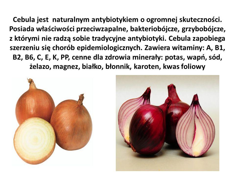 Cebula jest naturalnym antybiotykiem o ogromnej skuteczności