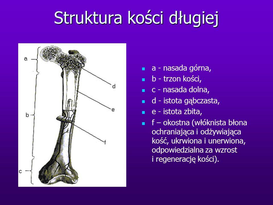 Struktura kości długiej