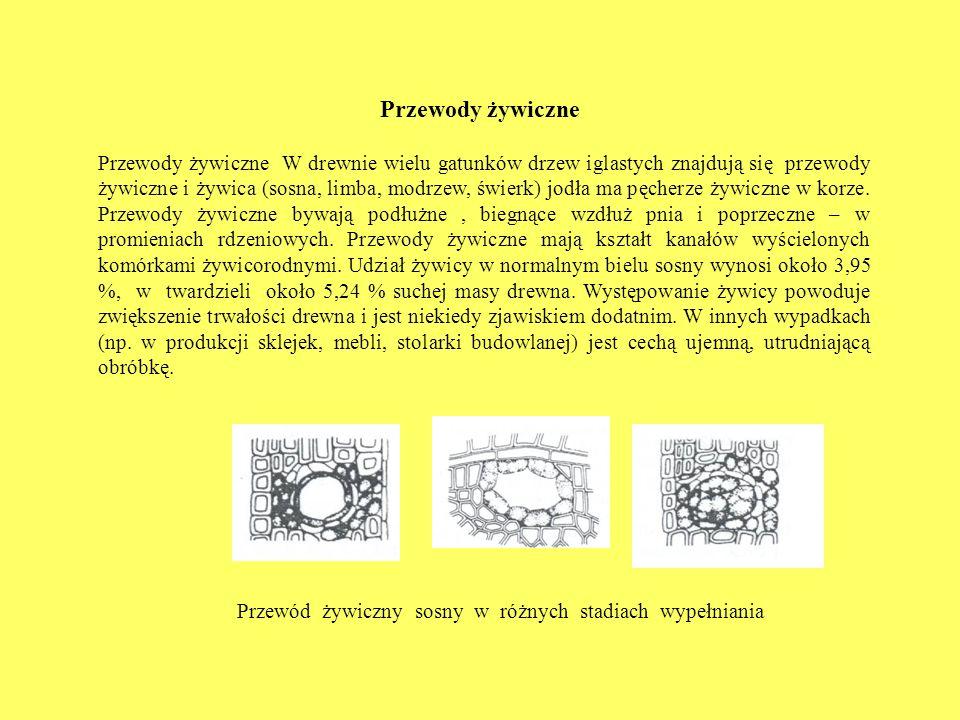 Przewód żywiczny sosny w różnych stadiach wypełniania