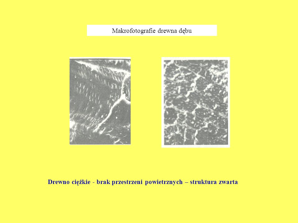Makrofotografie drewna dębu
