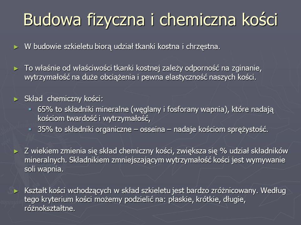 Budowa fizyczna i chemiczna kości