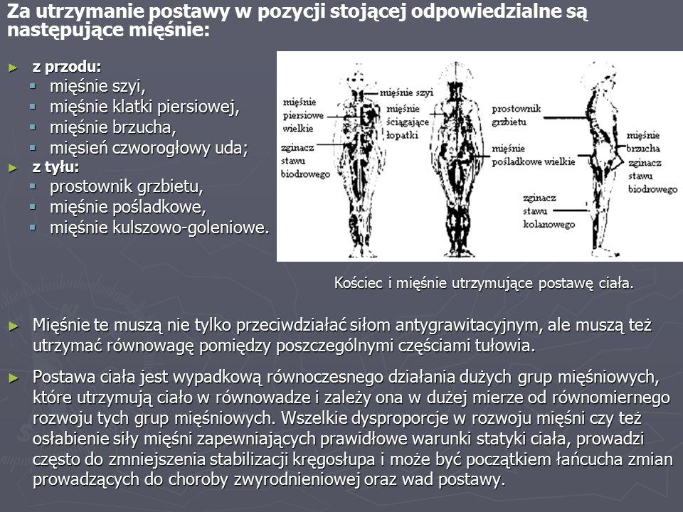Za utrzymanie postawy w pozycji stojącej odpowiedzialne są następujące mięśnie: