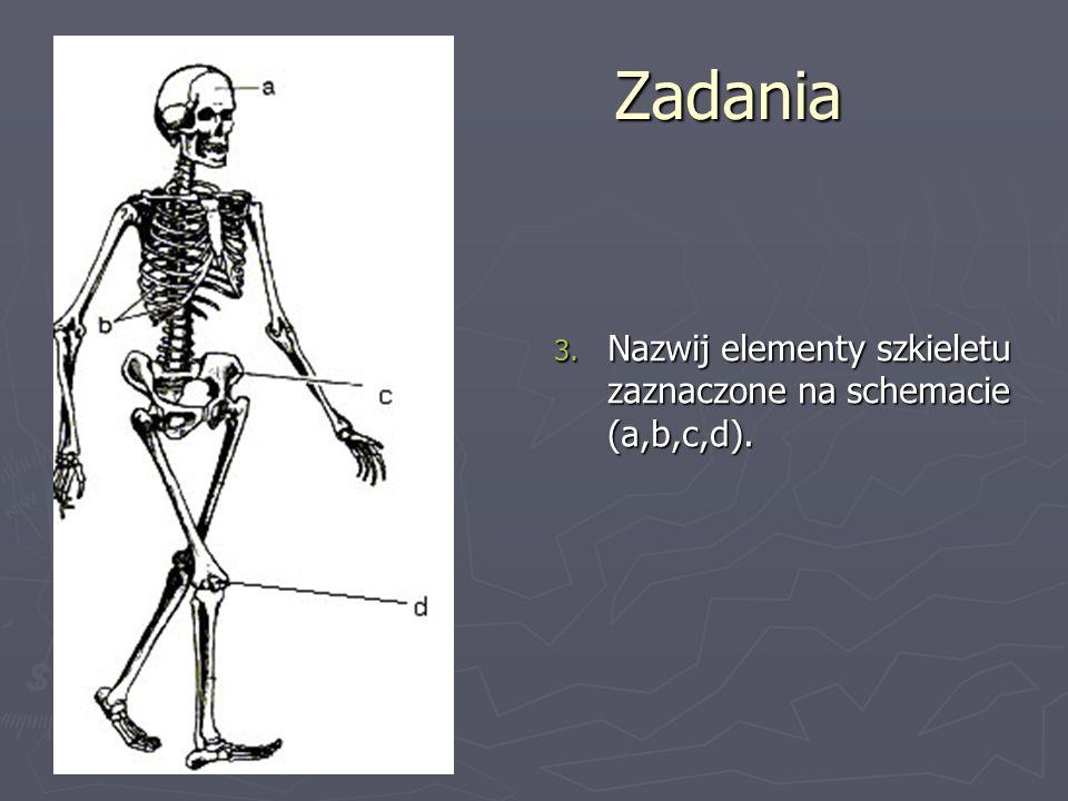 Zadania Nazwij elementy szkieletu zaznaczone na schemacie (a,b,c,d).