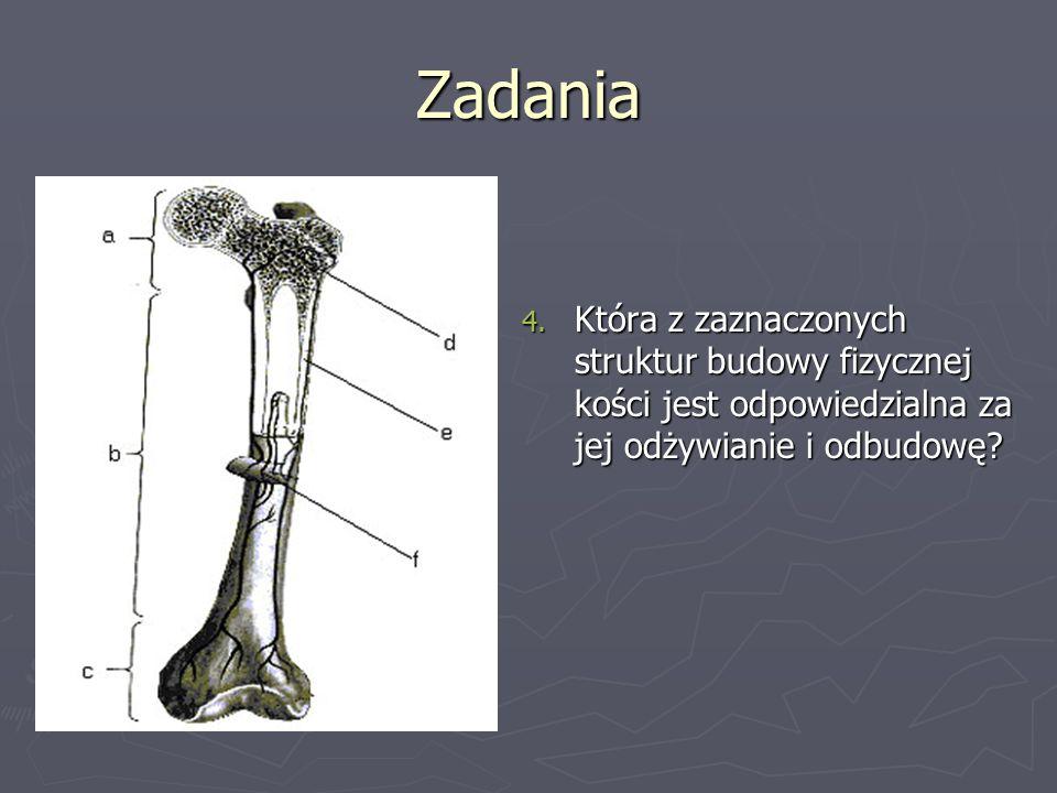 Zadania Która z zaznaczonych struktur budowy fizycznej kości jest odpowiedzialna za jej odżywianie i odbudowę