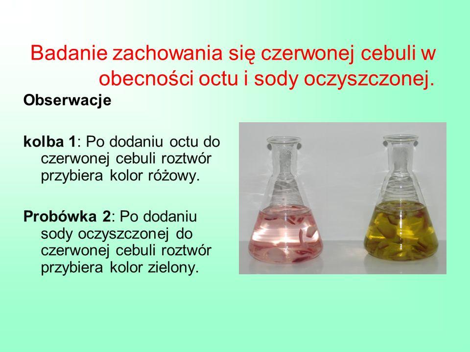 Badanie zachowania się czerwonej cebuli w obecności octu i sody oczyszczonej.