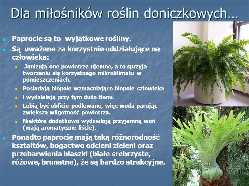 Dla miłośników roślin doniczkowych…