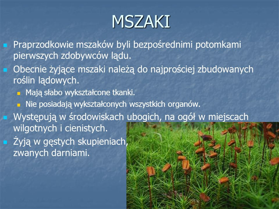 MSZAKI Praprzodkowie mszaków byli bezpośrednimi potomkami pierwszych zdobywców lądu.