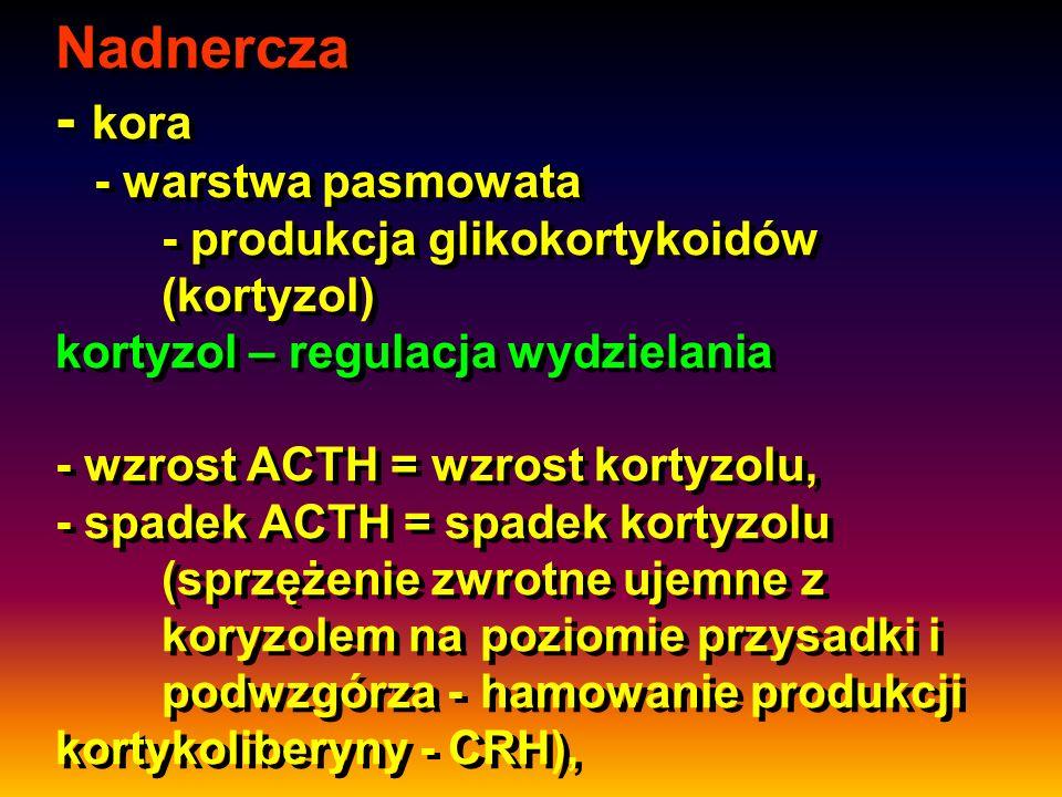 Nadnercza - kora - warstwa pasmowata. - produkcja glikokortykoidów