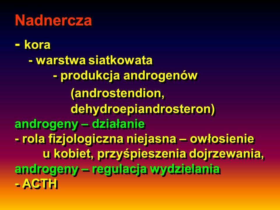 Nadnercza - kora - warstwa siatkowata. - produkcja androgenów