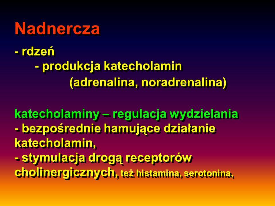 Nadnercza - rdzeń - produkcja katecholamin