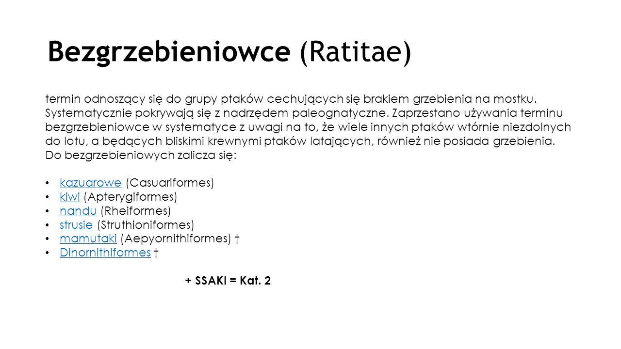 Bezgrzebieniowce (Ratitae)
