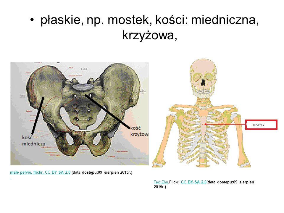 płaskie, np. mostek, kości: miedniczna, krzyżowa,